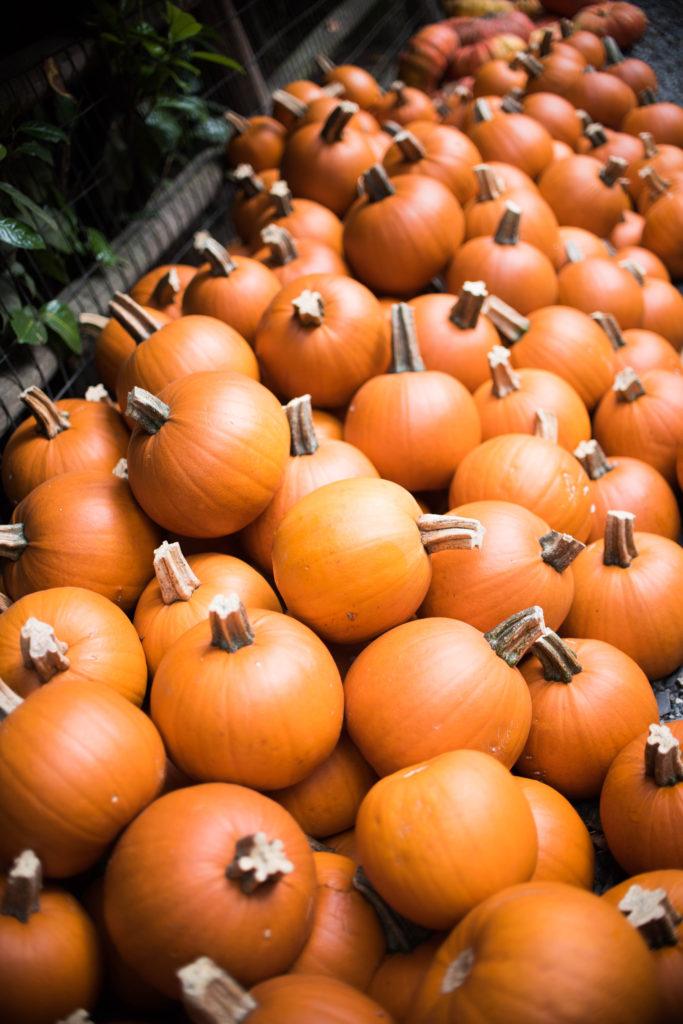 fall bucket list pumpkin patch