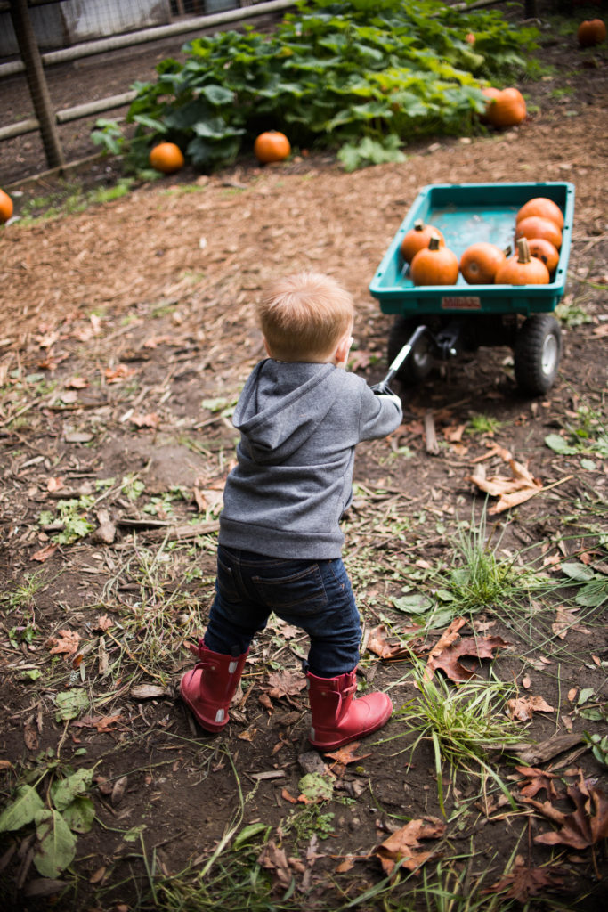 fall bucket list pumpkin patch photos