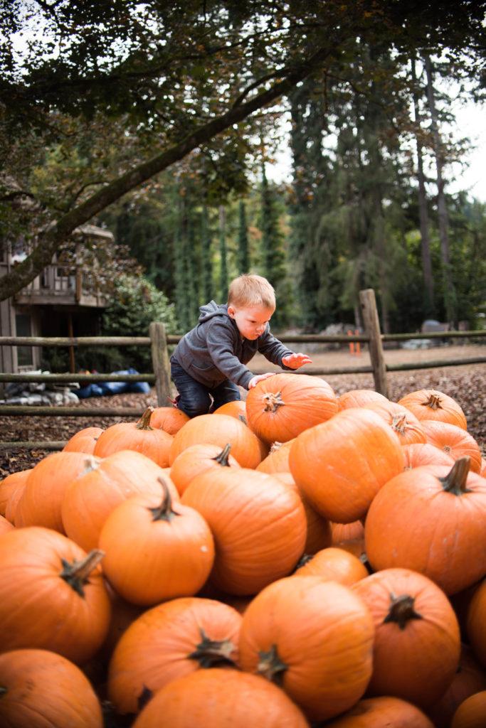 pumpkin patch fall bucket list