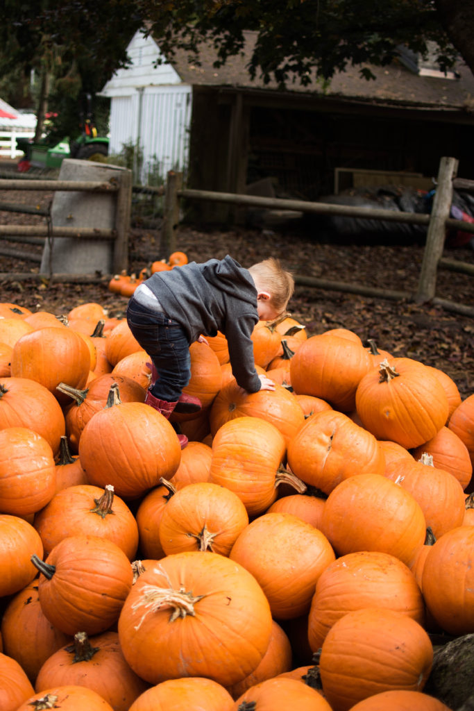fall bucket list pumpkin patch
